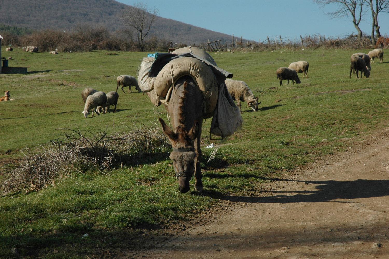 Tierhaltung Türkei